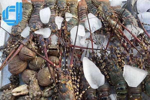 Du lịch Đà Nẵng từ Hải Phòng khám phá nét ẩm thực đặc sắc